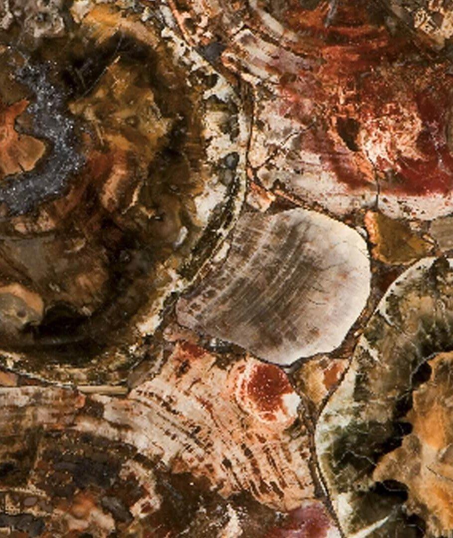 Caesarstone Albero Quartz